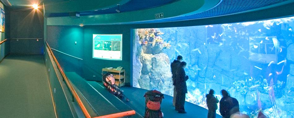 Marine Aquarium Plymouth